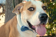 Dugan from Coming Home Rescue(1)
