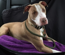 Wally from Coming Home Rescue